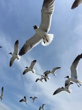 seagulls overhead