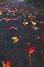 wet fall leaves on a paved road