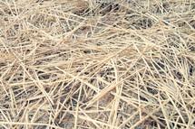 hay on the ground