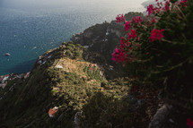flowers along a seaside cliff in Italy