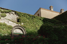 ivy growing up a wall in Italy
