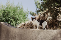 a skinny cat on a wall in Italy