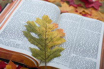 Fall leaf on the pages of an open Bible.