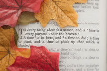 Fall leaves on page of a Bible page open to Ecclesiastes 3.