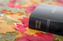 Santa Biblica on fall leaves