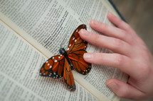 a butterfly resting on the pages of a Bible - peace with God