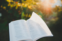 open Bible outdoors in sunlight