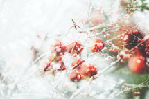 a double exposure of berries on branches with snow