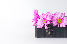 Pink flowers on a Bible.