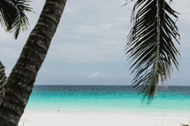 palm tree on a beach in the Bahamas