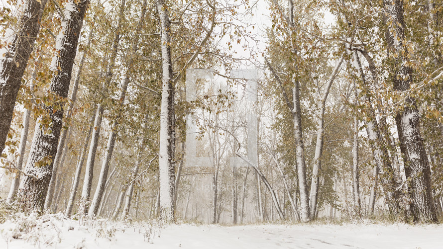 snow covered trees in fall