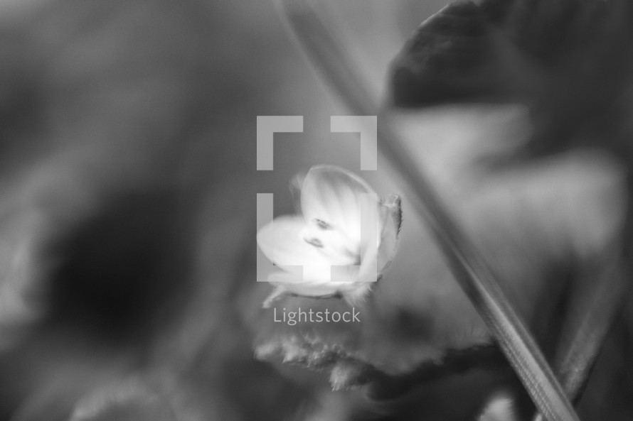 small flower in black and white