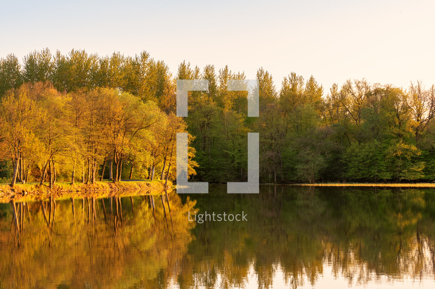 trees reflecting onto lake water
