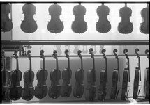Rows of violins hanging in a shop.