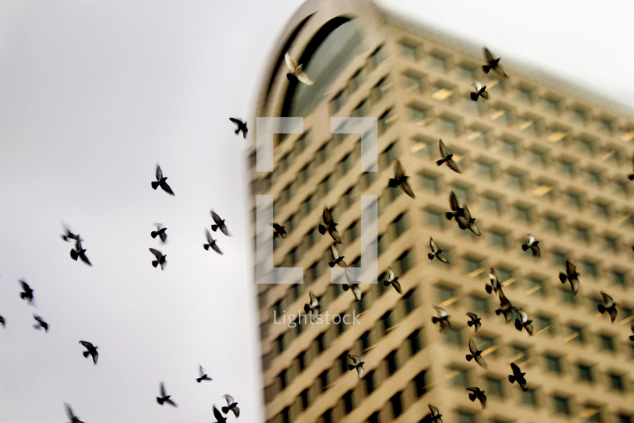 flock of birds flying in front of a building