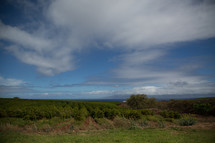 Blue sky over farmland in Hawaii.