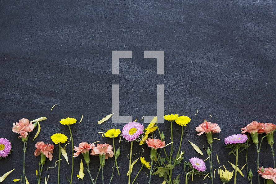 border of flowers on a black background.