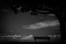 empty park bench under a tree