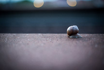 A snail moving very slowly across the cement.