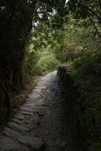 Tree covered stone path in the outdoors.