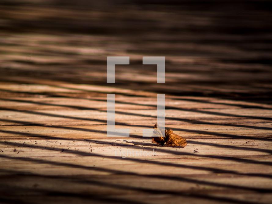 leaf on a patio