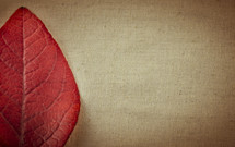 red fall leaf and tan linen
