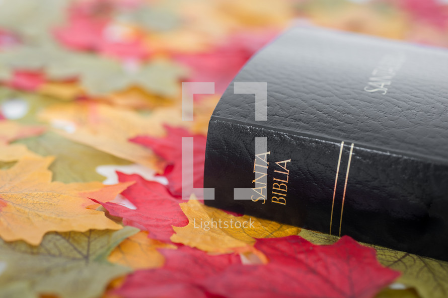 Santa Biblica on fall leaves