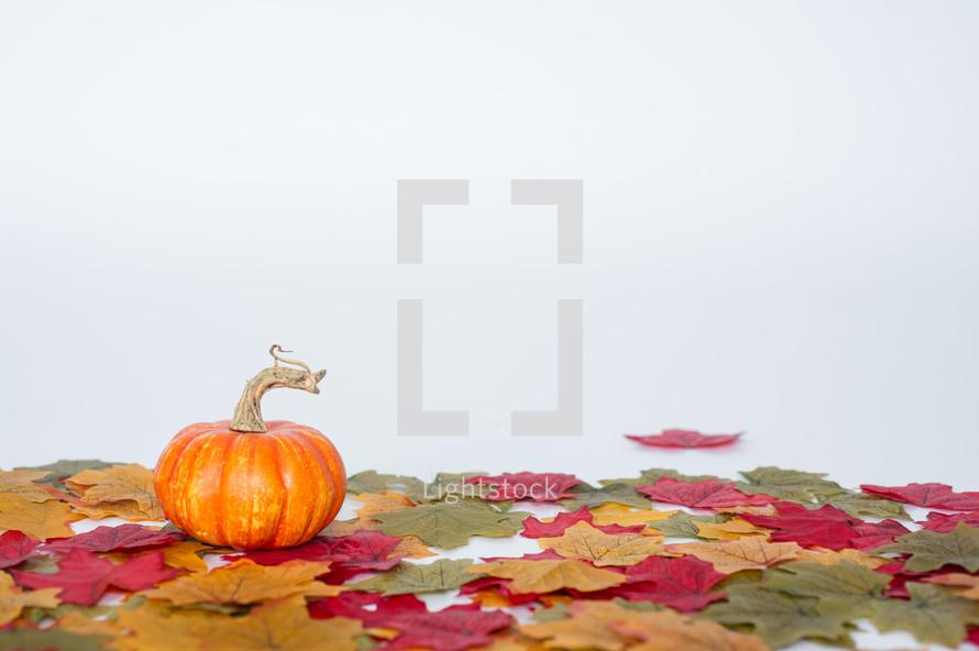 Miniature pumpkin on fall leaves.