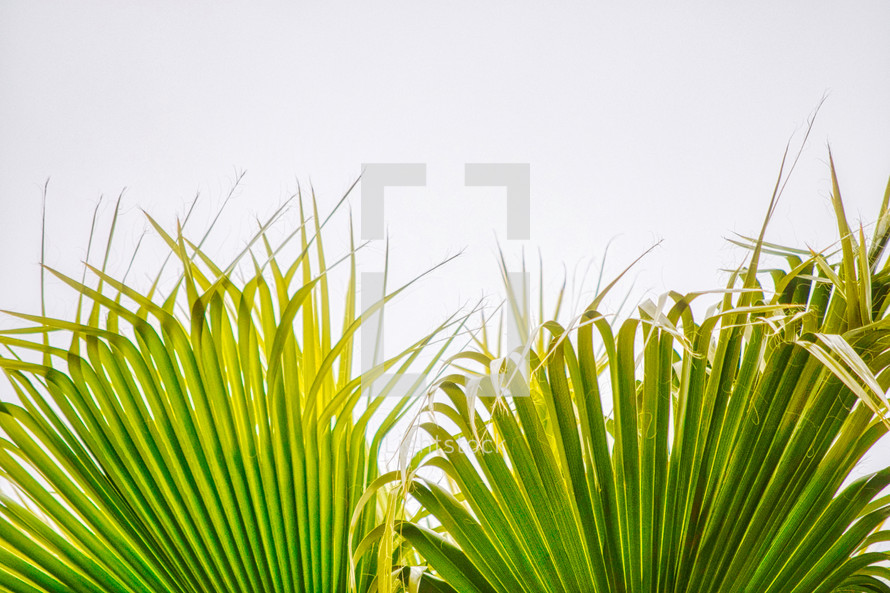 palms in sunlight against a white background