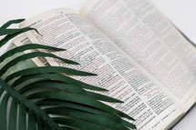 palm frond and open Bible