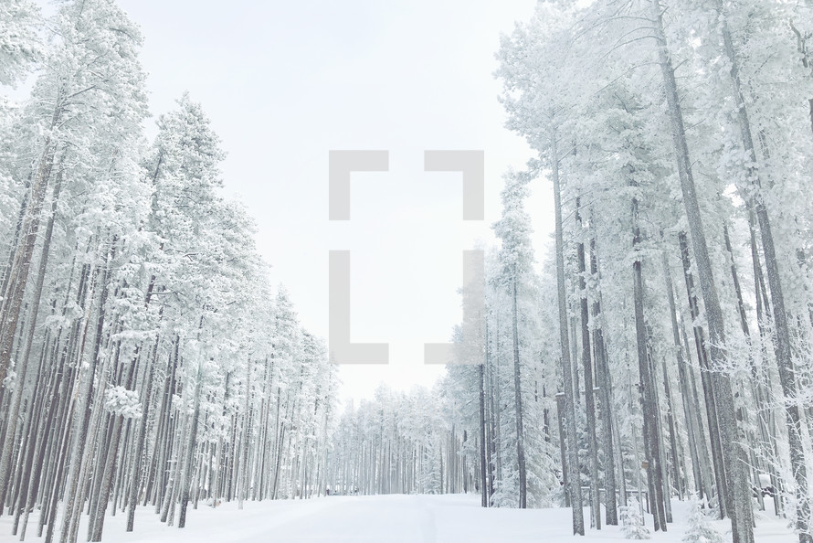 white road through frosted woods