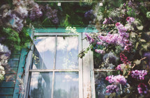 a vintage window surrounded by spring lilacs and leaves layered in double exposure