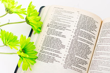 Green flowers on an open Bible.