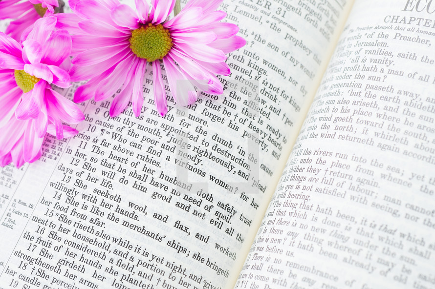 An open Bible with pink flowers laying on it.