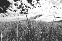 tall grass in a meadow
