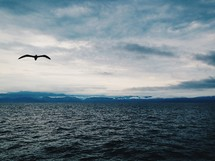 Seagull flying over the ocean water under a cloudy sky.