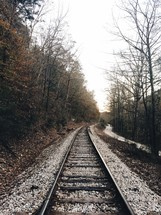 train tracks in a forest