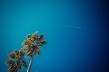 Airplane in the sky palms in the wind