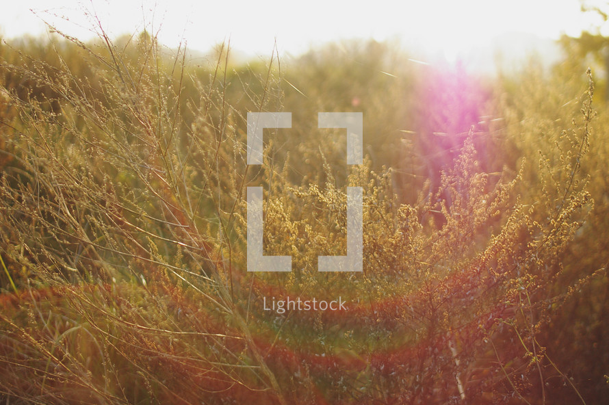 sunlight shining on an overgrown field