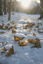 brown leaves on snow