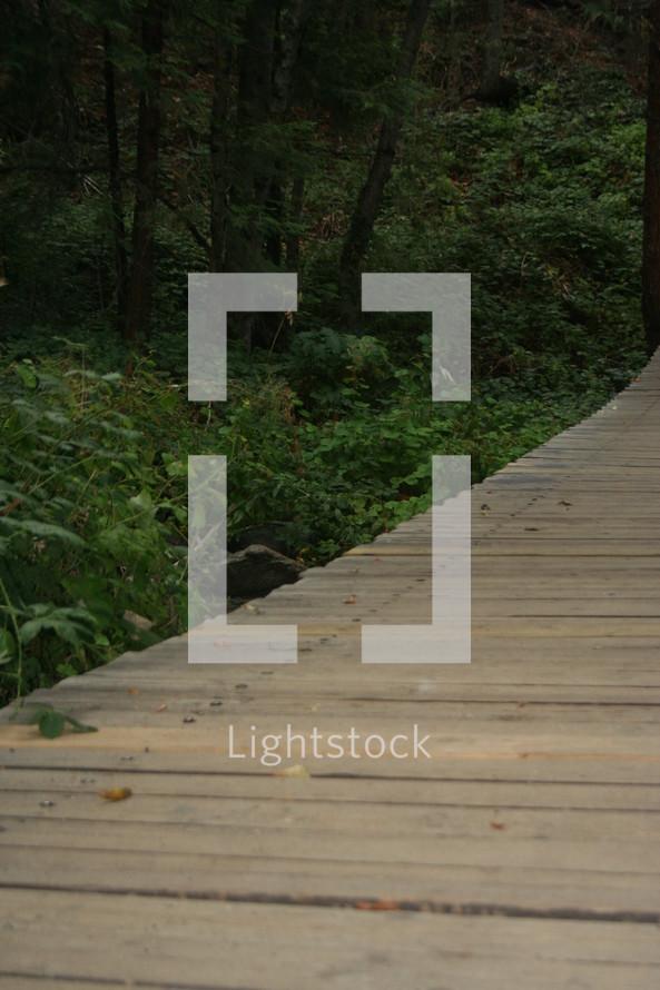 Wooden bridge through forest