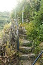 Stone steps leading through overgrown plants.