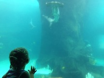 child watching a hammerhead shark at an aquarium