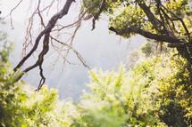 opening through dense vegetation in a jungle