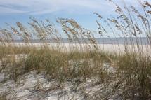 sea oats on sand dunes