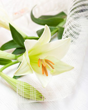 white Easter lily flower bouquet, religious symbol of the first holy communion