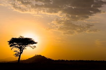 Silhouette of a thorn tree at sunset on the African savanna