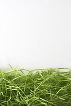 green decorative grasses border