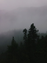 fog over and evergreen forest