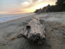 driftwood washed up on a beach